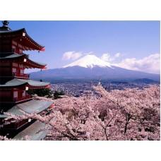 Выгодные звонки в Японию