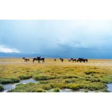 Выгодные звонки в Киргизию
